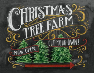 Christmas Tree Farm Now Open - Cut Your Own